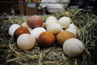 basket of eggs.jpg